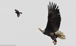 Kisah Nabi Musa a s Dengan Seekor Burung Helang