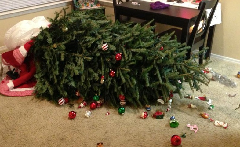 Best christmas tree keeps falling