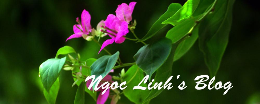 Ngoc Linh's Blog