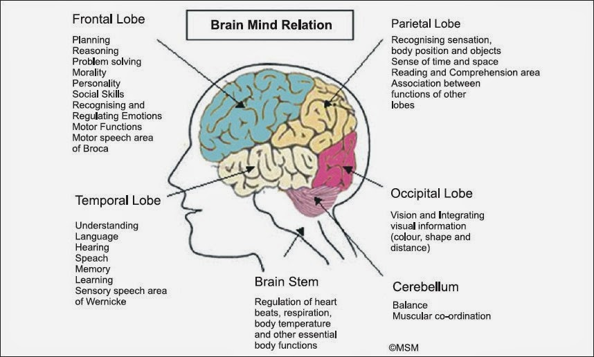 Brain structures and functions chart dolapgnetband brain structures ccuart Choice Image