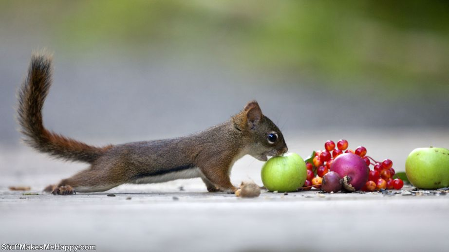 Breathtaking Pictures of Squirrels in the Photographs of Andre Villeneuve