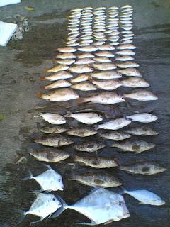 mancing laut semarang