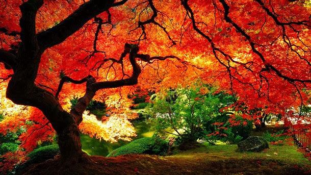 Equinócio de Outono: 5 Fatos estranhos sobre o outono