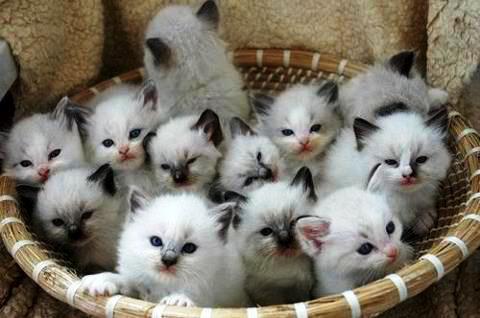 Los Gavirias de Sopetrán: El gato
