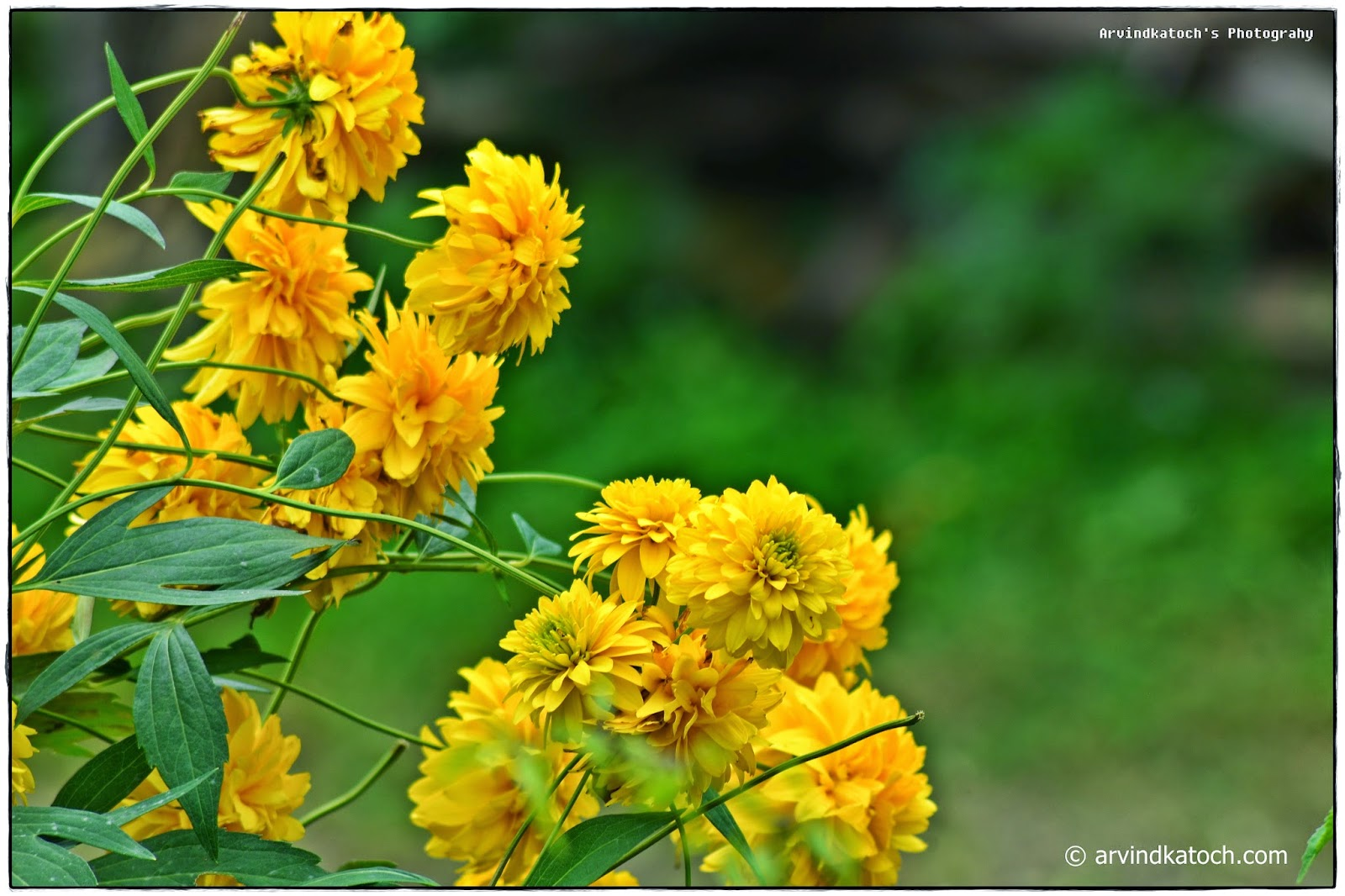 Flowers, Garden, Yellow,