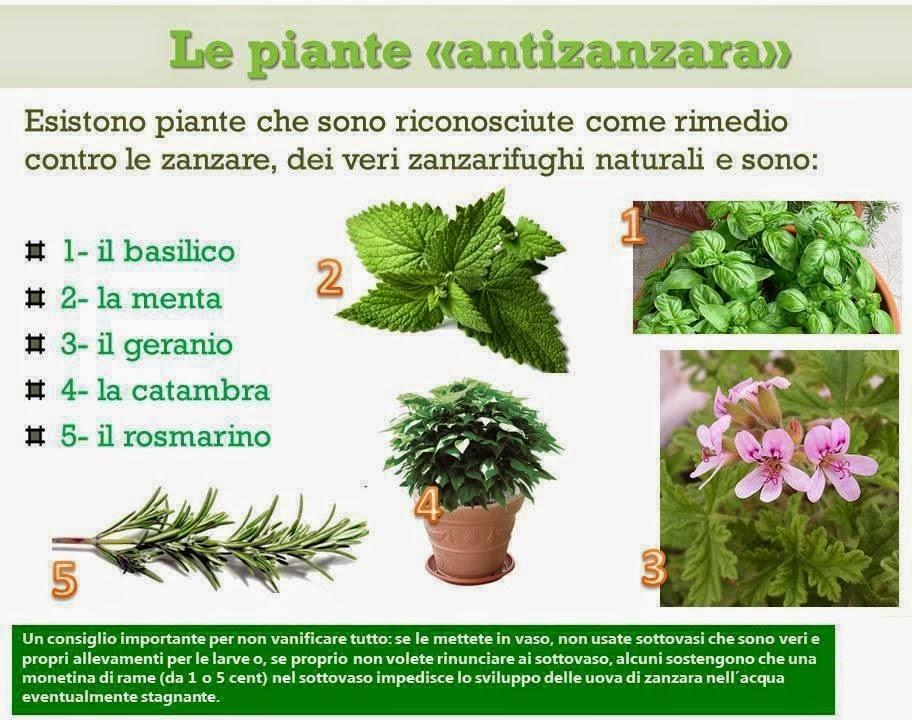 Made in veg made in yle rimedi naturali anti zanzara e - Contro le zanzare in casa ...
