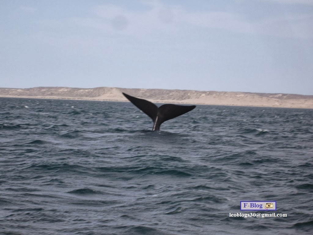 Avistaje de ballenas - Península Valdes