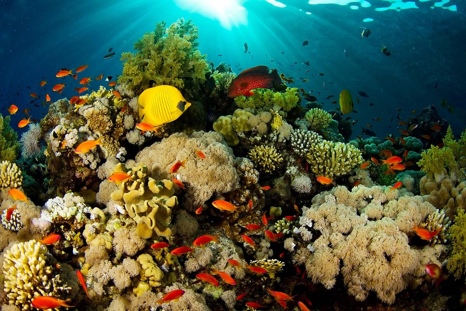 Taman Nasional Bunaken Indonesia Wonderful Nature