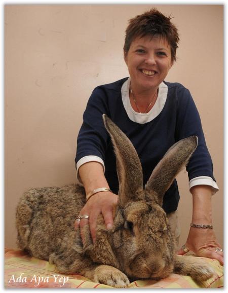foto kelinci terbesar di dunia - gambar hewan - foto kelinci terbesar di dunia