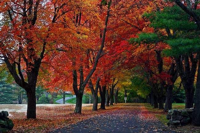 terowongan pohon autumn