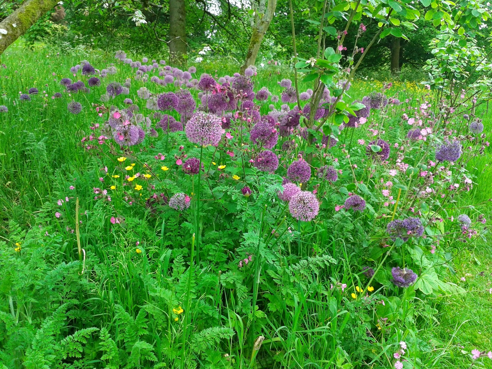 Dyrham Park {National Trust} // 76sunflowers