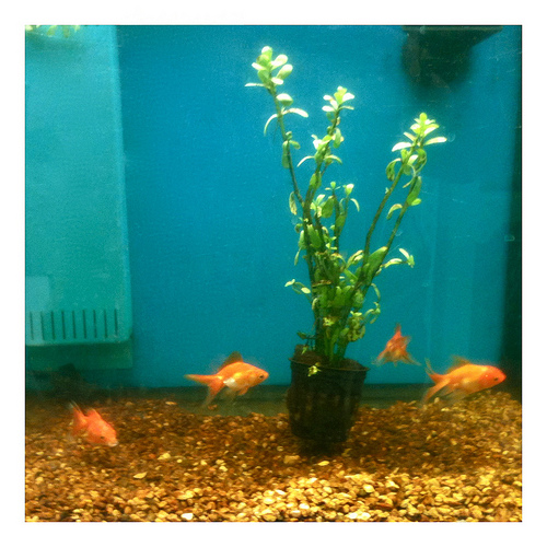 Fish aquariums walmart large size of coffee table india for Glow in the dark fish walmart