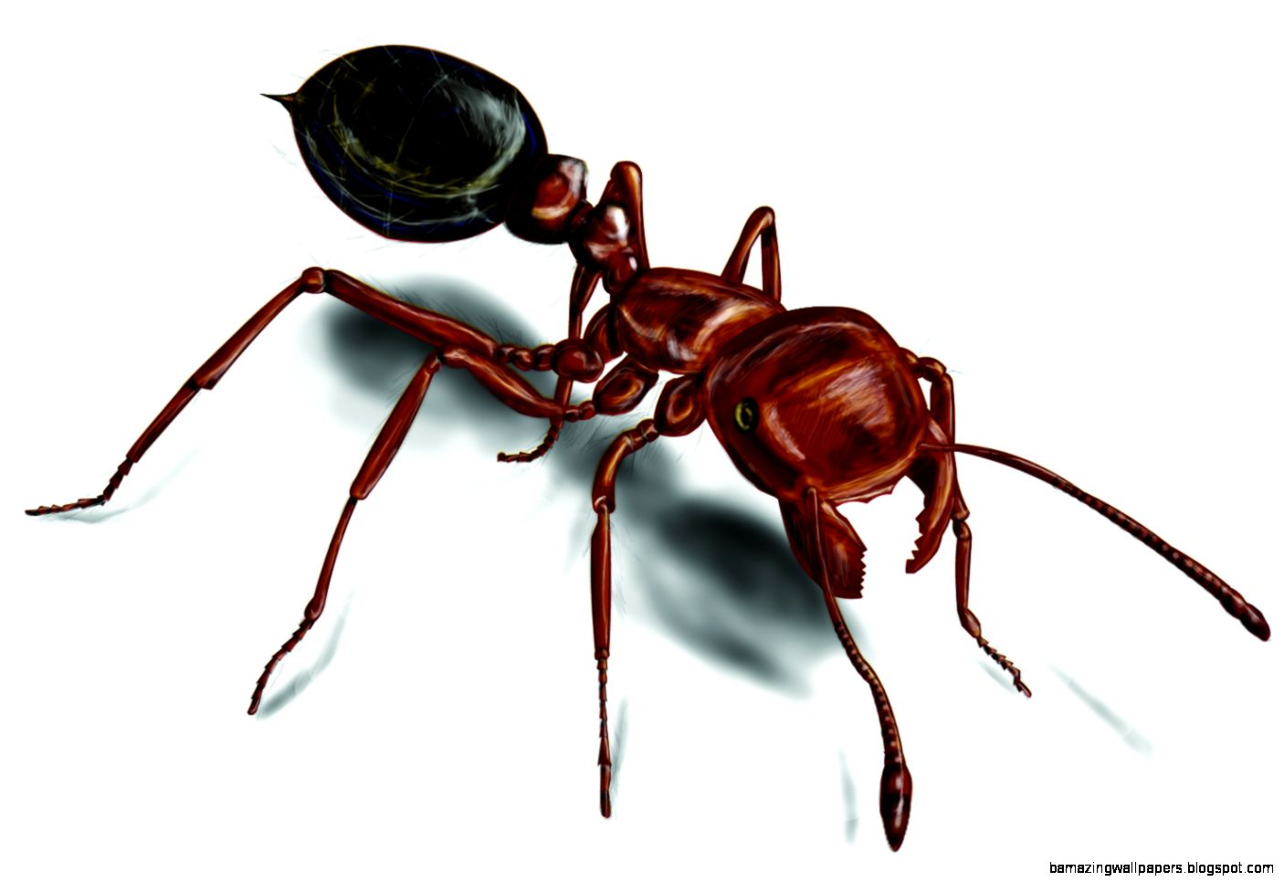 Fire Ants Red Fire Ant Control amp Facts