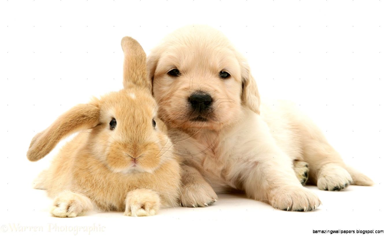 Cute Baby Puppies Wallpaper Hd Widescreen 11 HD Wallpapers