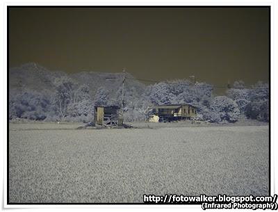 紅外線攝影@塱原