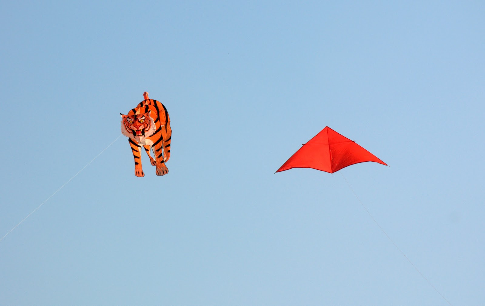 HD Wallpapers Fine: kites in the sky flying festival on 14 ...