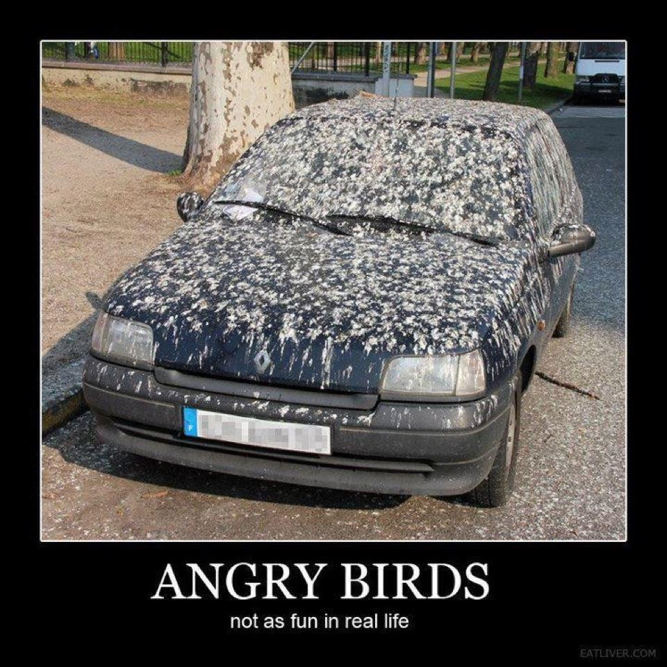 funny angry birds