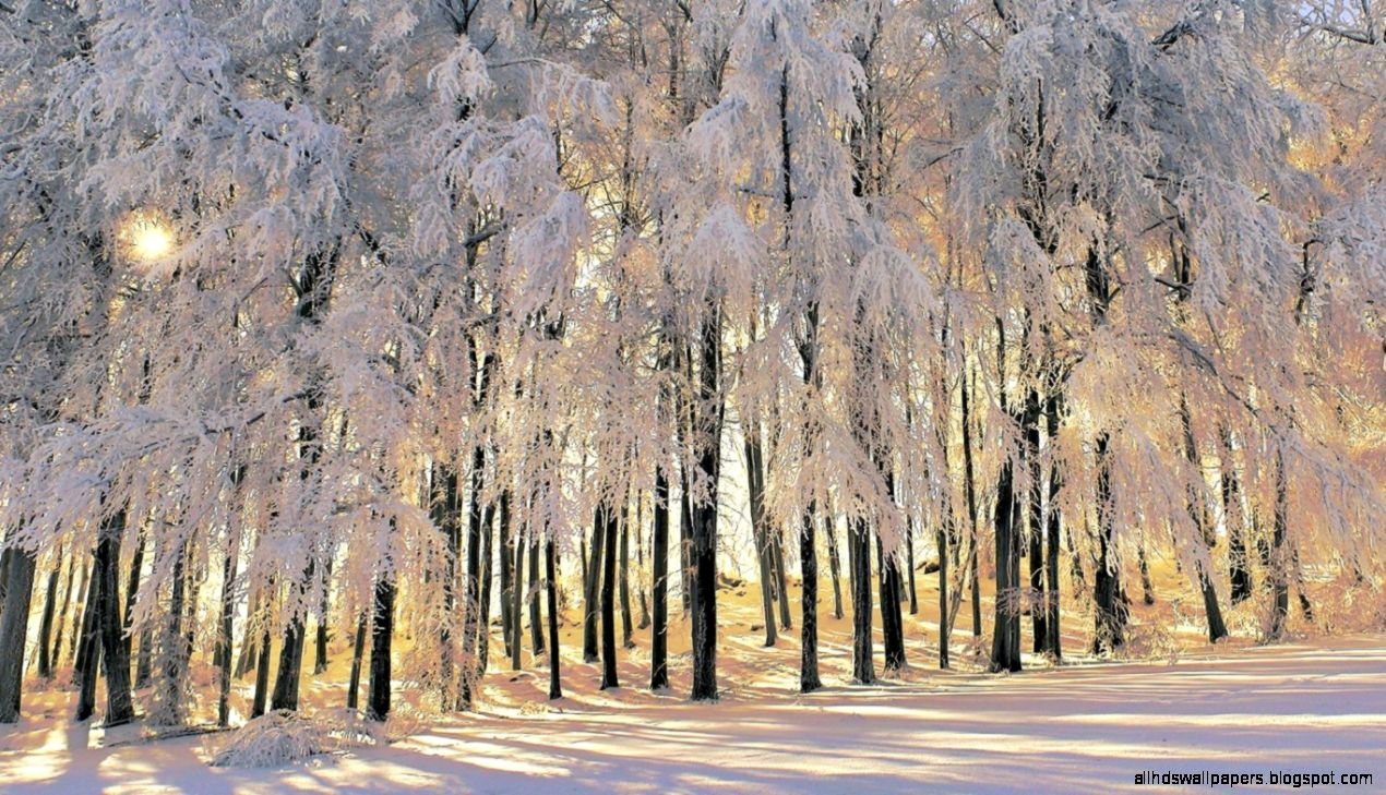 widescreen winter images all hd wallpapers