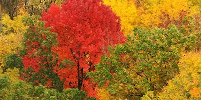 Wisconsin greeting Mother Nature's return for her annual fall foliage tour