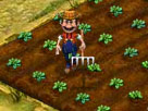 Çiftlik İşlet Oyunu
