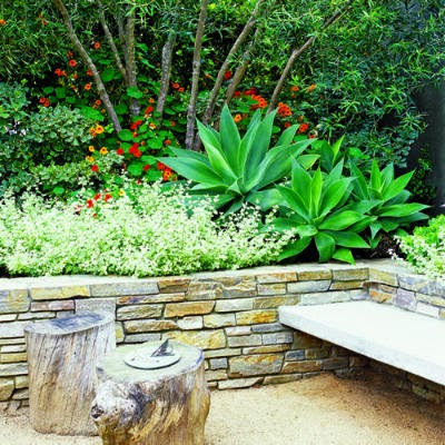 7 Water Saving Plants for Eichler and Midcentury Moden Home Gardens ...