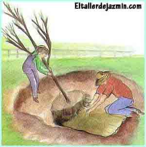 árboles, trasplante, arbustos