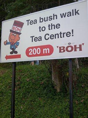 tea+bush+walk+to+the+.jpg