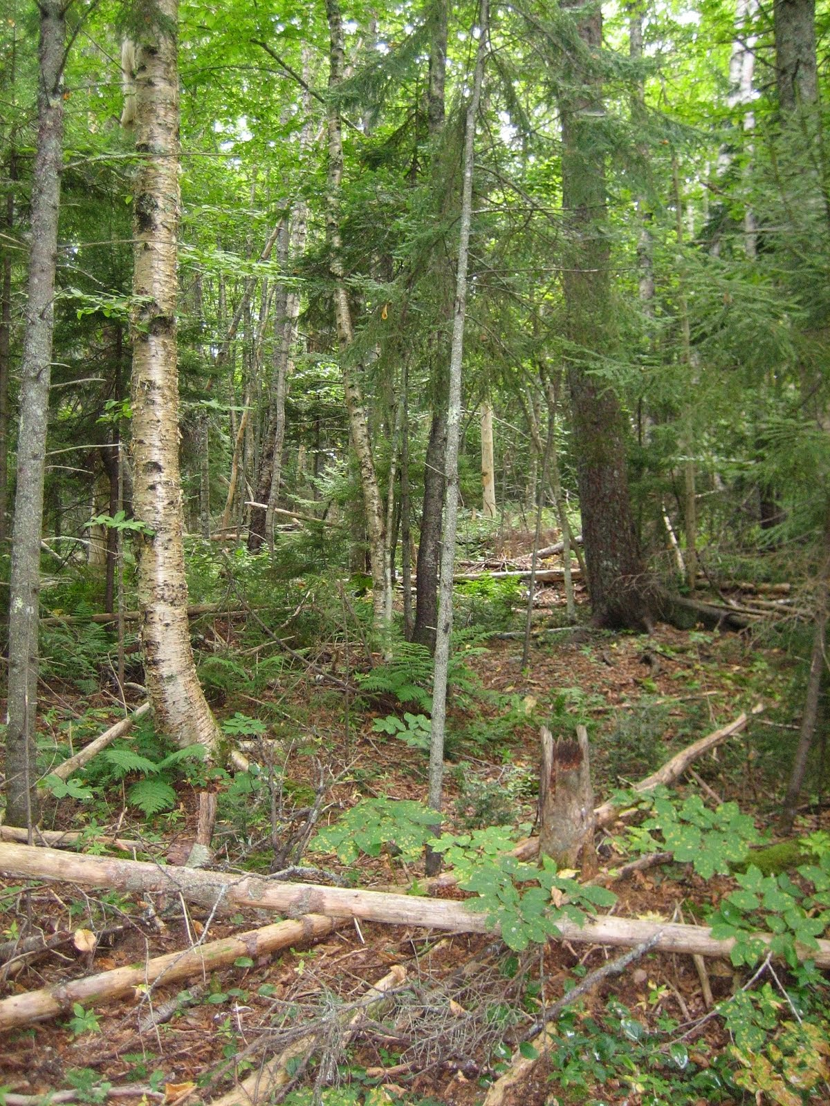 Preserve the Acadian Forests