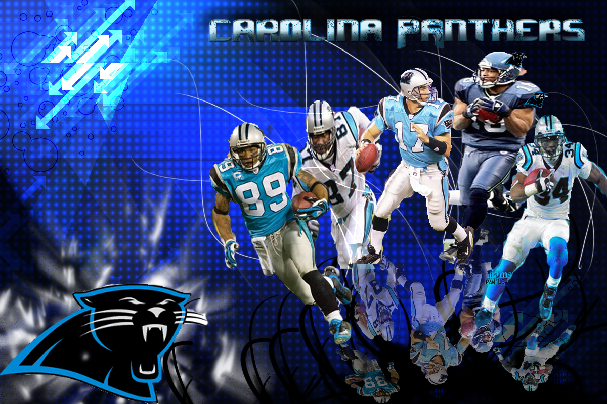 carolina panthers wallpaper daily pictures