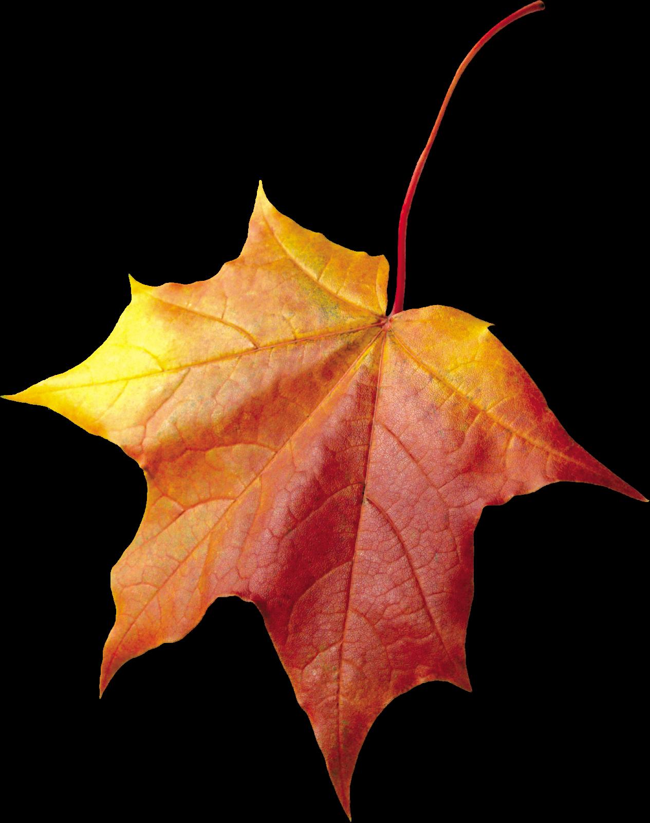 Фон листья вектор