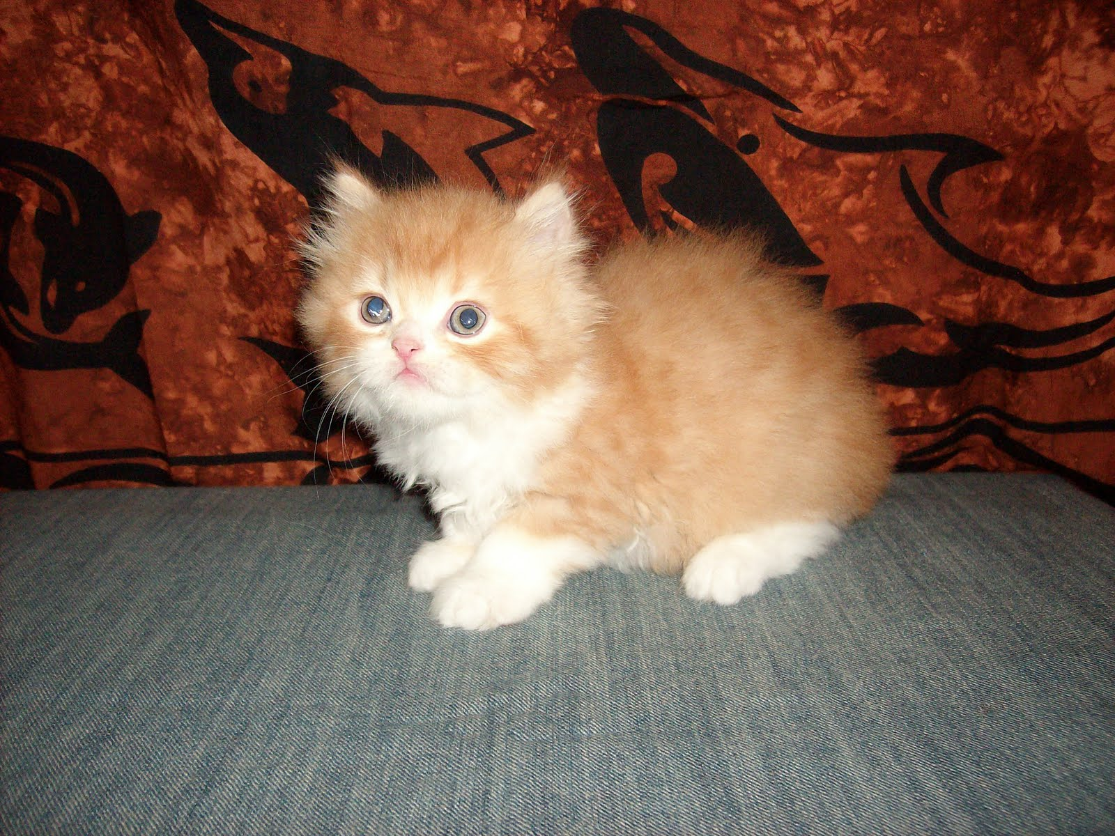 Foto Kucing Umur 3 Bulan Comel