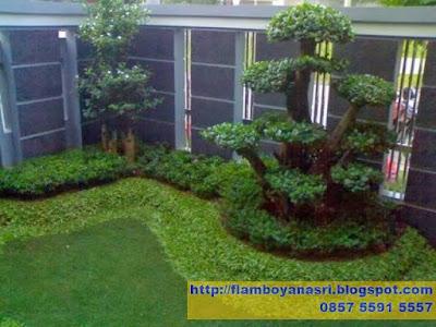 Tukang Taman Surabaya Taman Minimalis Daun Dolar