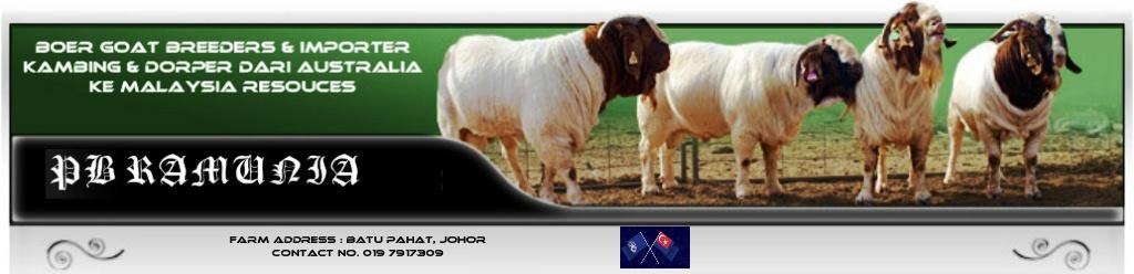 PB Ramunia Ternak kambing Boer Dan membekal kambing dari Australia Ke Malaysia