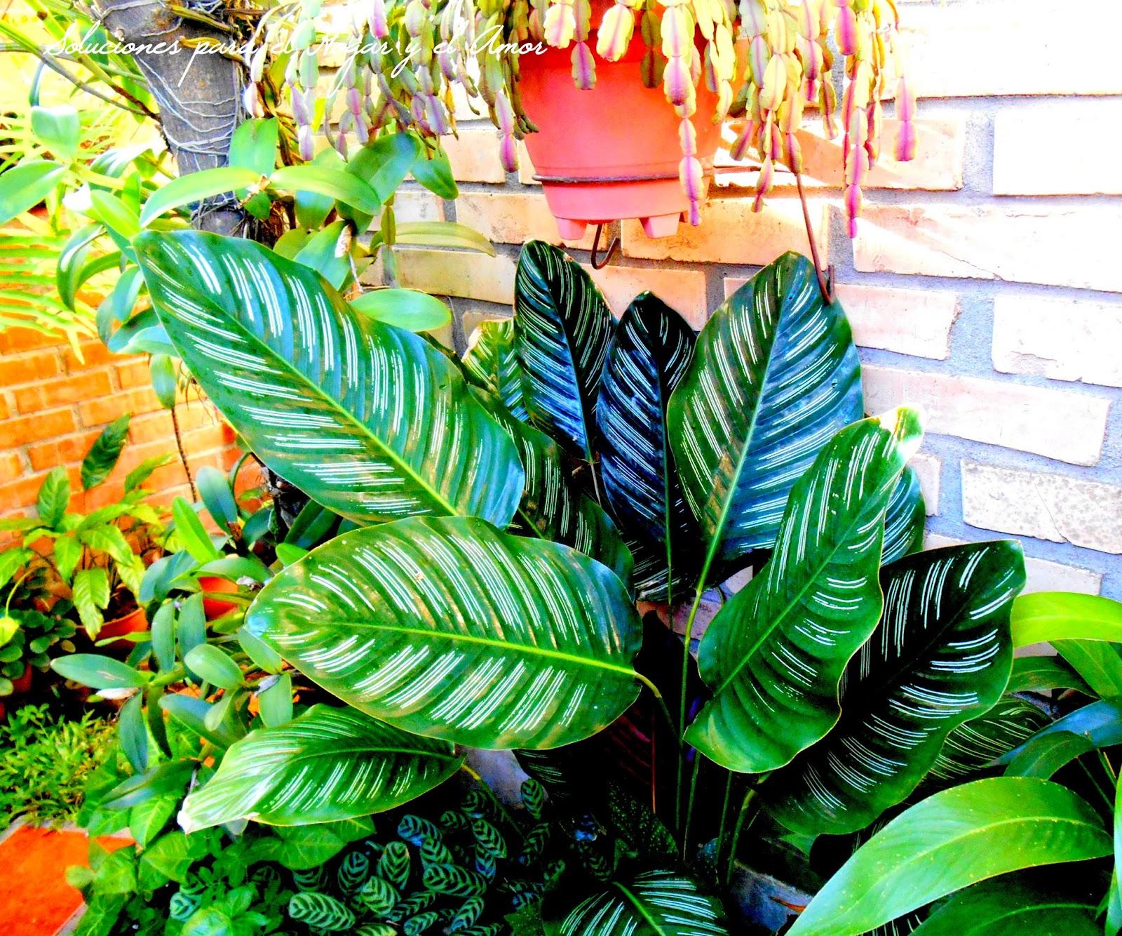planta de hojas verdes con rayas, Calathea, jardín
