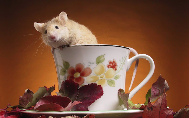 funny animals, mouse in a cup