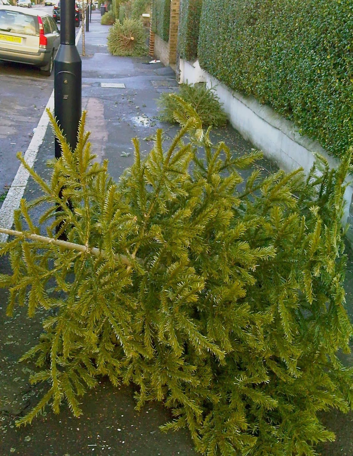Spruce it is not: Thousands of pounds worth of mutilated Christmas fir-trees are thrown out onto London's streets within month of purchase