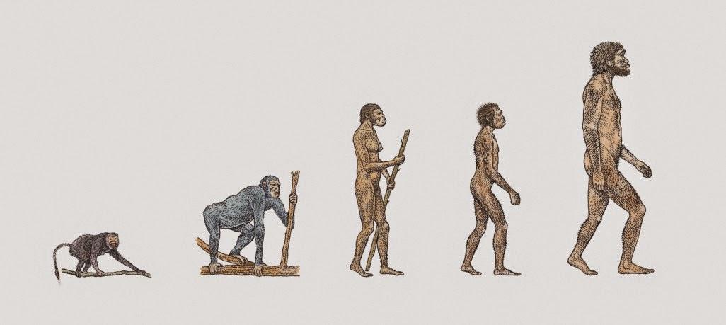 Evolucion del hombre en biologia