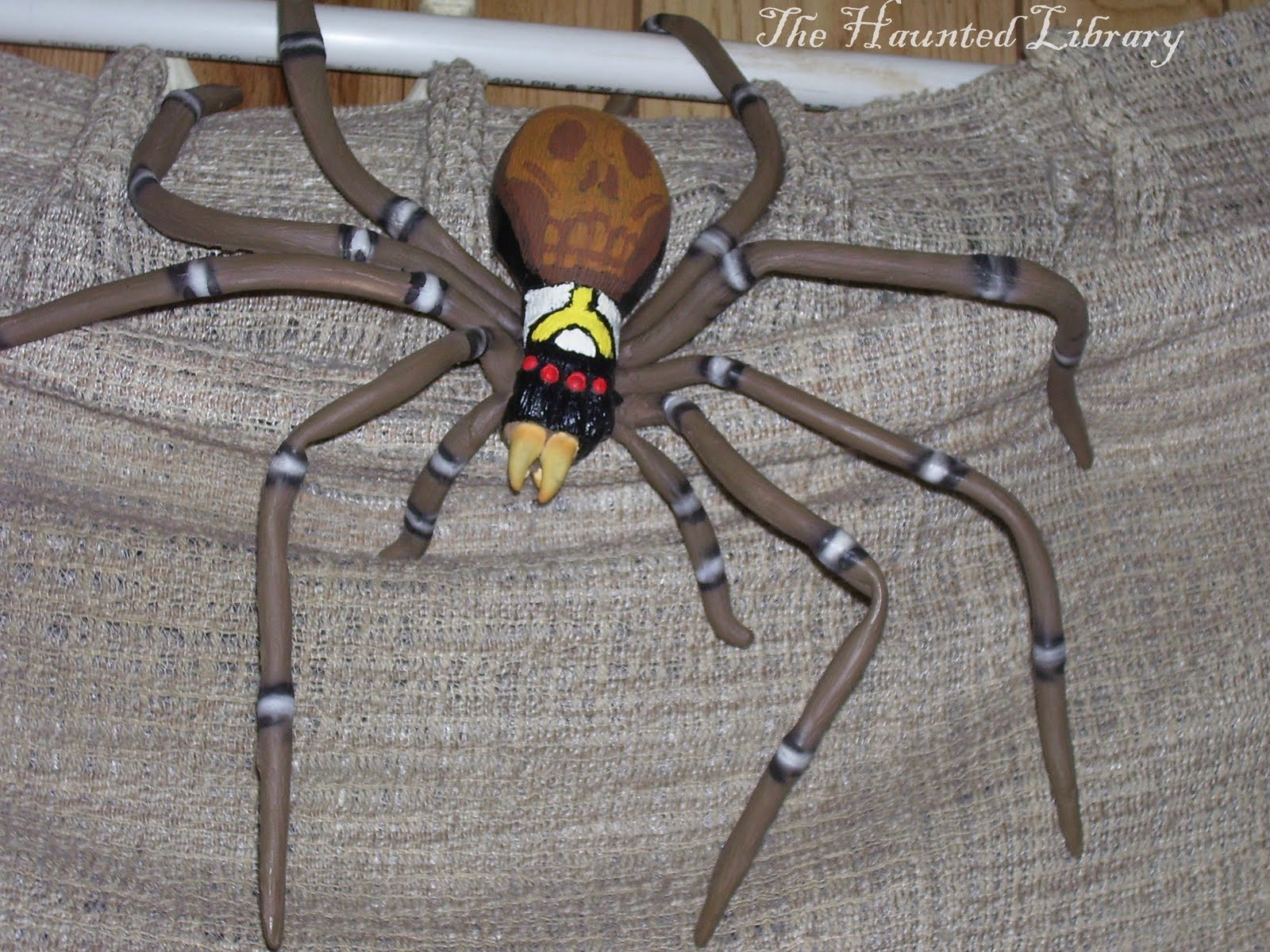 Gardensafari House Spiders (with lots of pictures)]