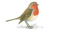 Little Robin Red Breast