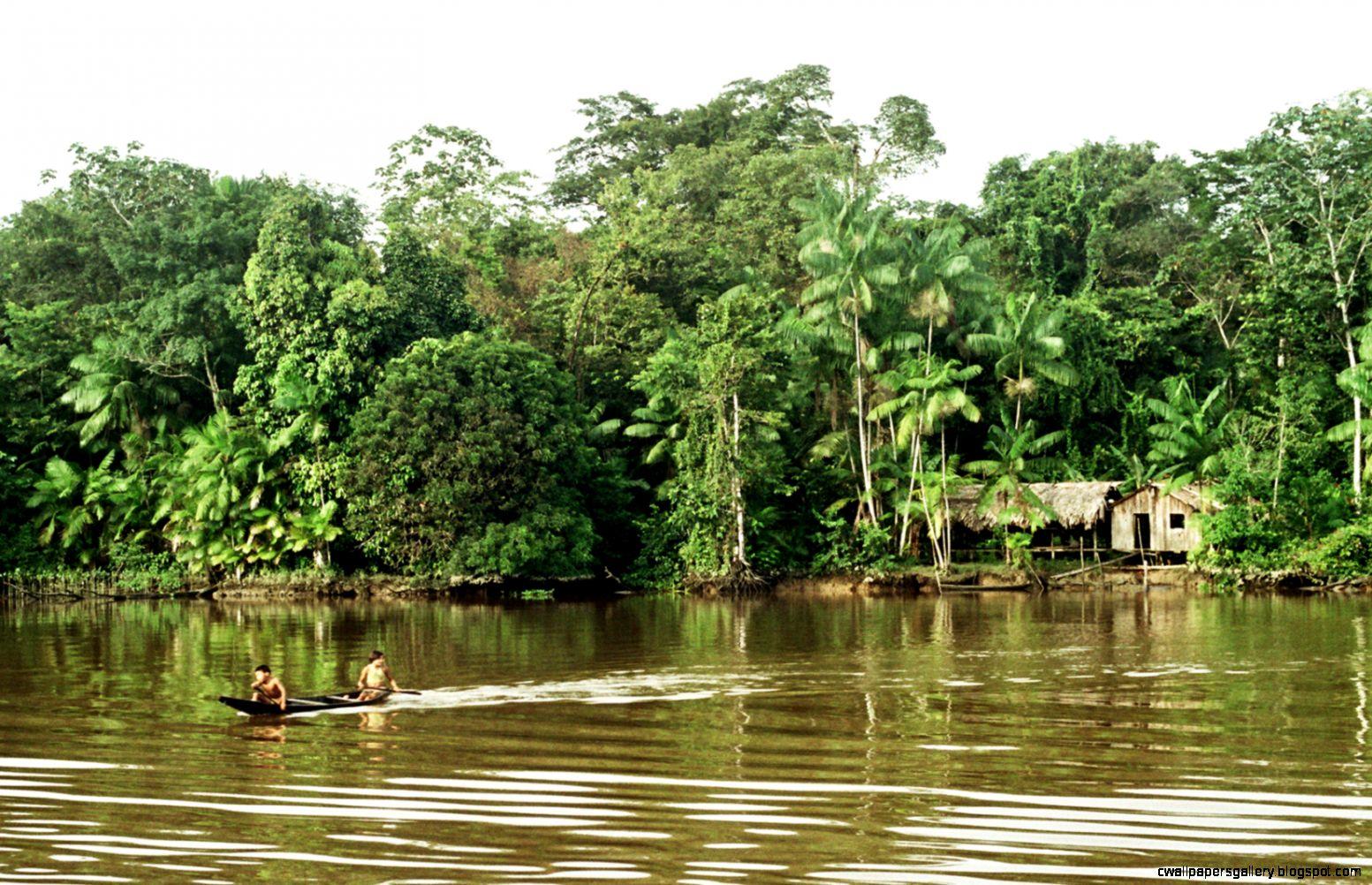 Amazon River   Wikipedia the free encyclopedia
