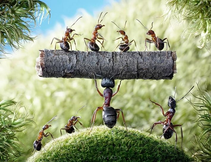 Imagem de Formigas malhando