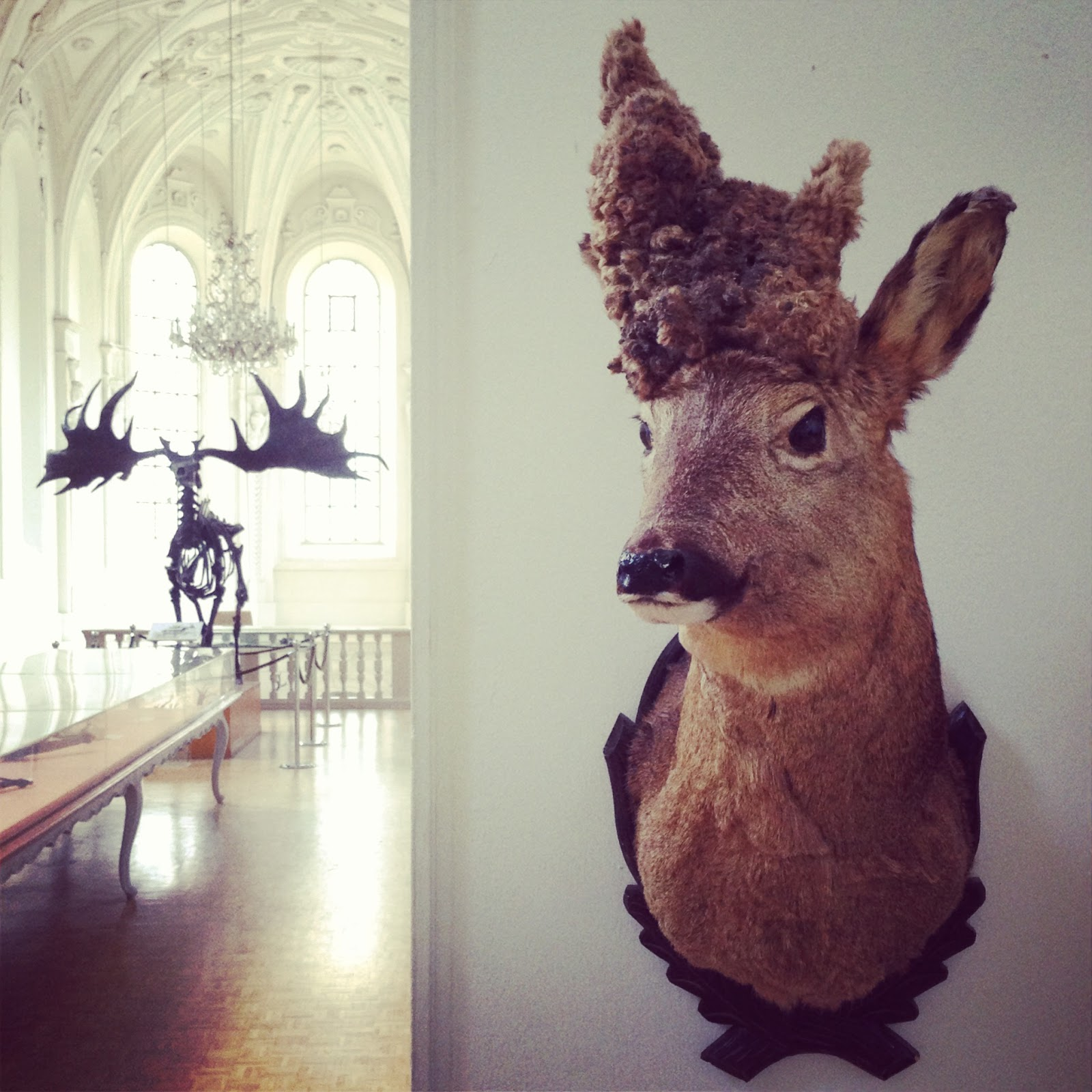 Morbid Anatomy: Museum of Hunting and Fishing (Deutsches ...