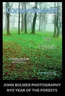 Year of the Forests