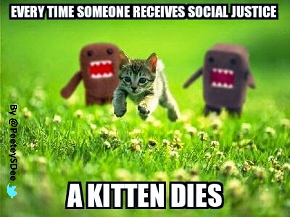 #SocialJustice Kitten