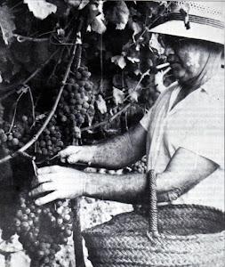 Un secret a veus: El vi de Menorca el segle XX