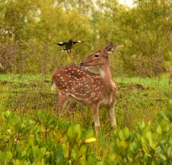 Visit Sundarbans......in the lap of nature. Click on the picture.