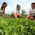 Agricultor aumenta renda produzindo hortaliças no semiárido