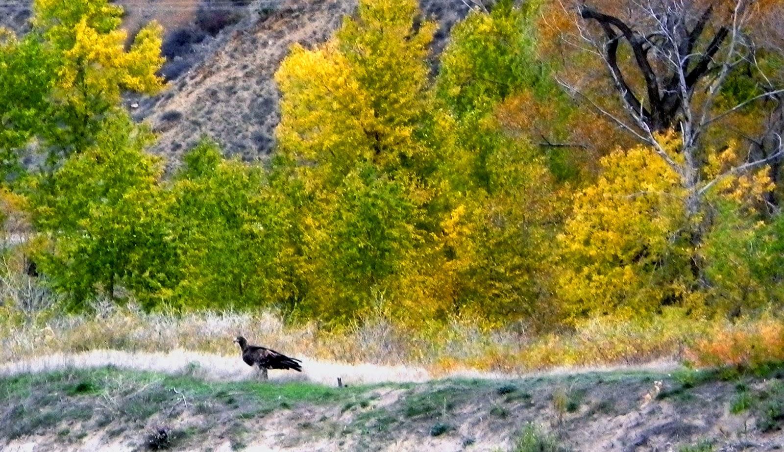 Montana: Missouri River - Fly Fishing - Wild Life