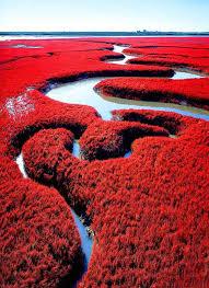 http://agenpokerdmnqq.blogspot.com/2015/10/pantai-berselimut-merah-yang-indah.html
