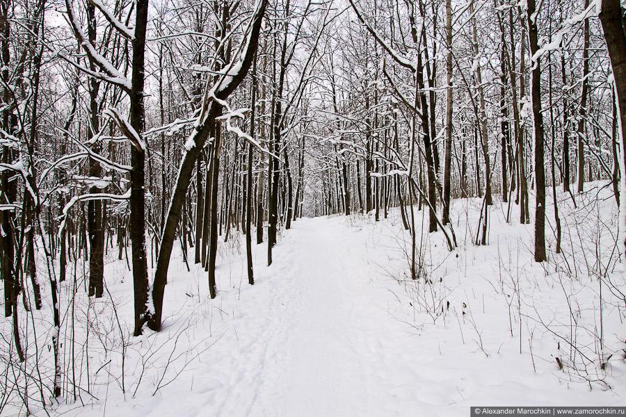 Деревья в парке зимой